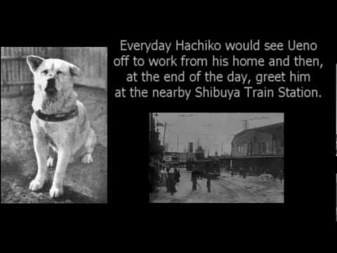 Dog Movie True Story